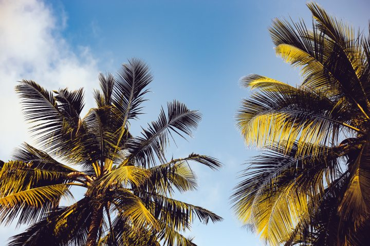 clouds-coconut-trees-daytime-861306